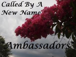 #10 Ambassadors